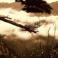 O jemném cvičení Tchaj-ťi čchűan Čchen