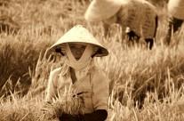 Dbejte o své zdraví pomocí tchaj-ťi čchűan Čchen