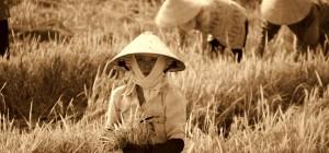 tai chi pro zdravý život bez bolestí