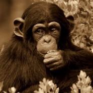 Nový čínský rok ohnivé opice 2016